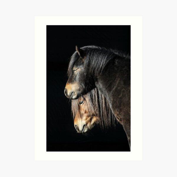 30.3.2017: Shetland Ponies Art Print