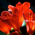 Flowers by Extraordinary Light