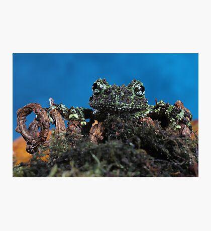 Vietnamese mossy frog  Photographic Print