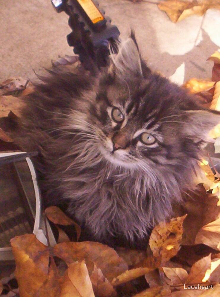 Kitten by Laceheart