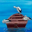 Pelicans aboard by caroline ellis
