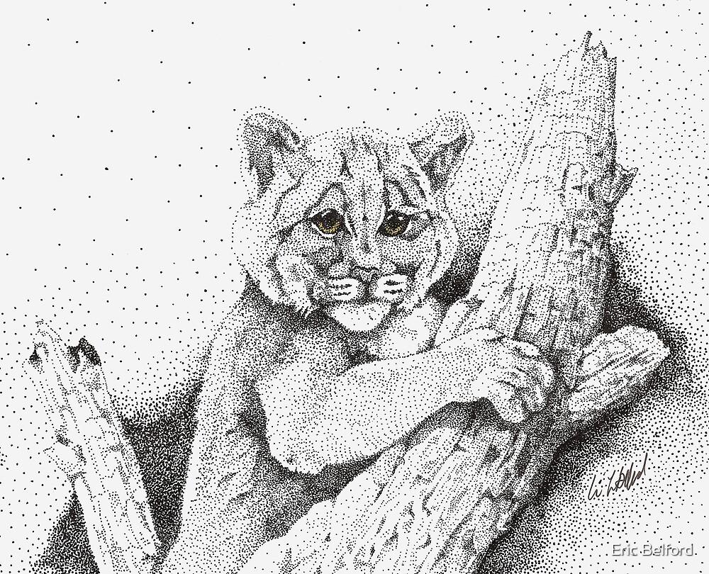 Canadian Lynx Cub by Eric Belford