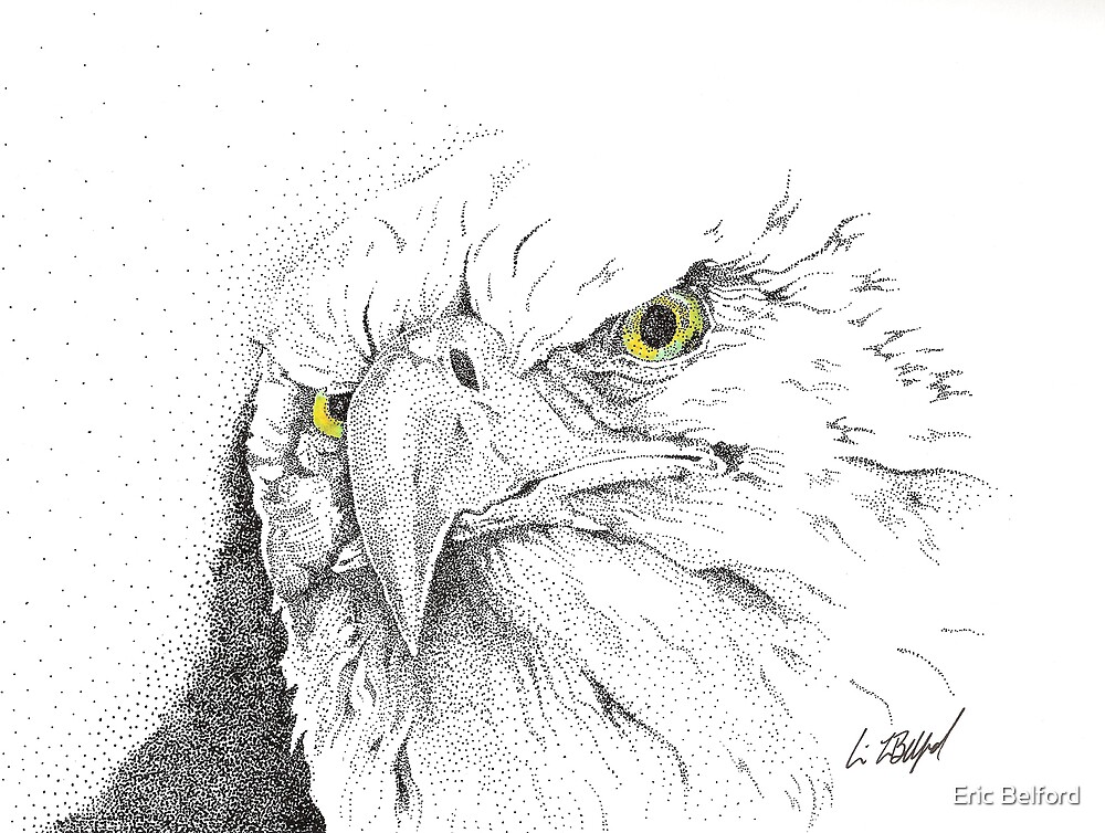 Eagle by Eric Belford