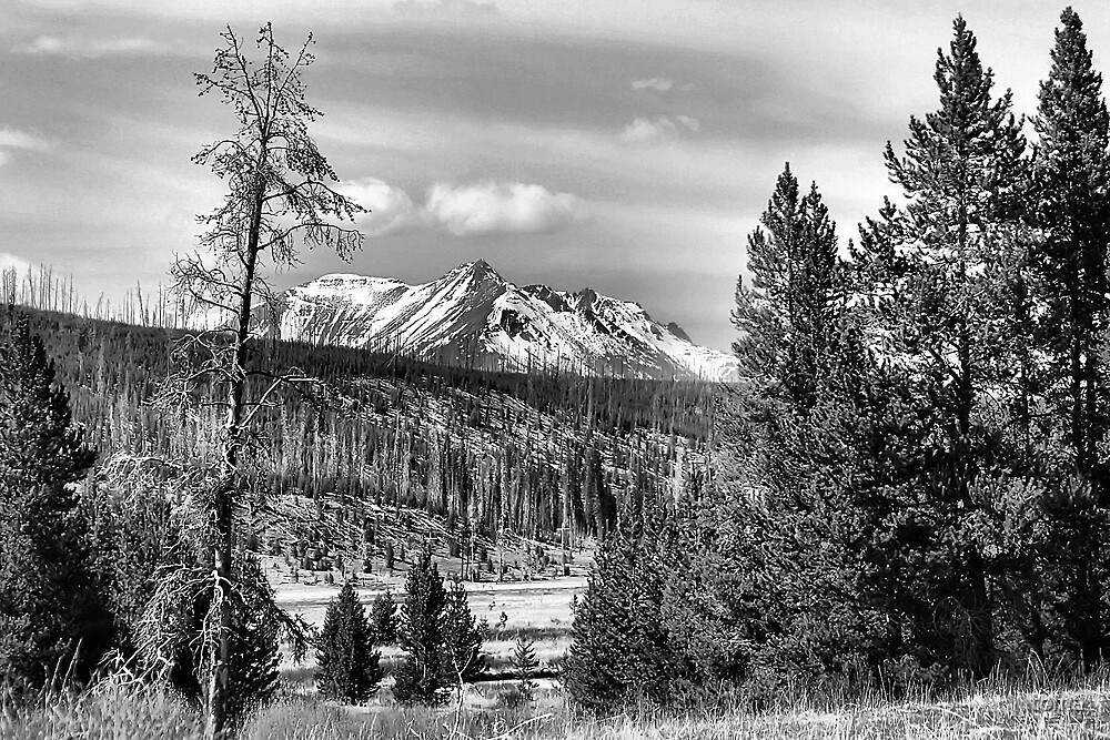 yellowstone in b/w by toma