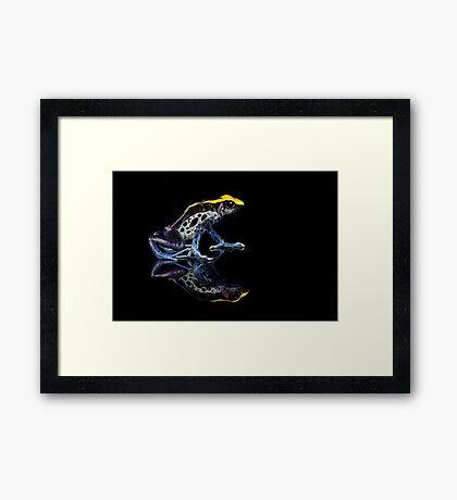 Dartfrog reflections on black Framed Print