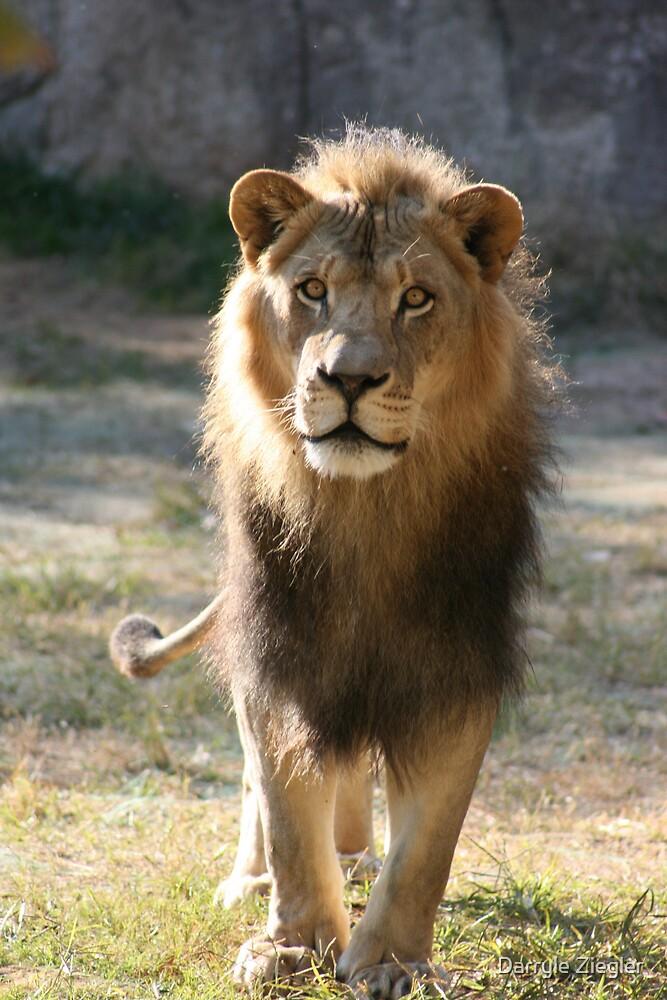 The King 2 by Darryle Ziegler