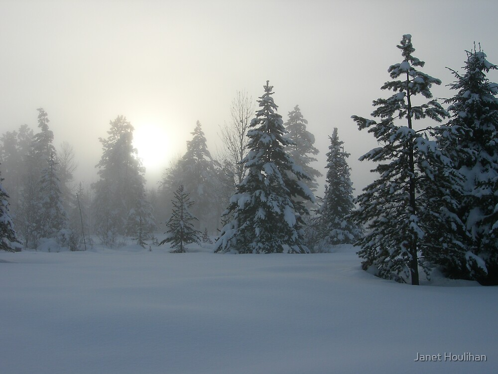 Foggy winter forest by Janet Houlihan