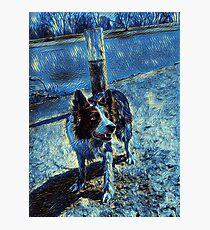 Border Collie - Mesmerizing Eye - Herding Dog - Stylized Painting 2 Photographic Print