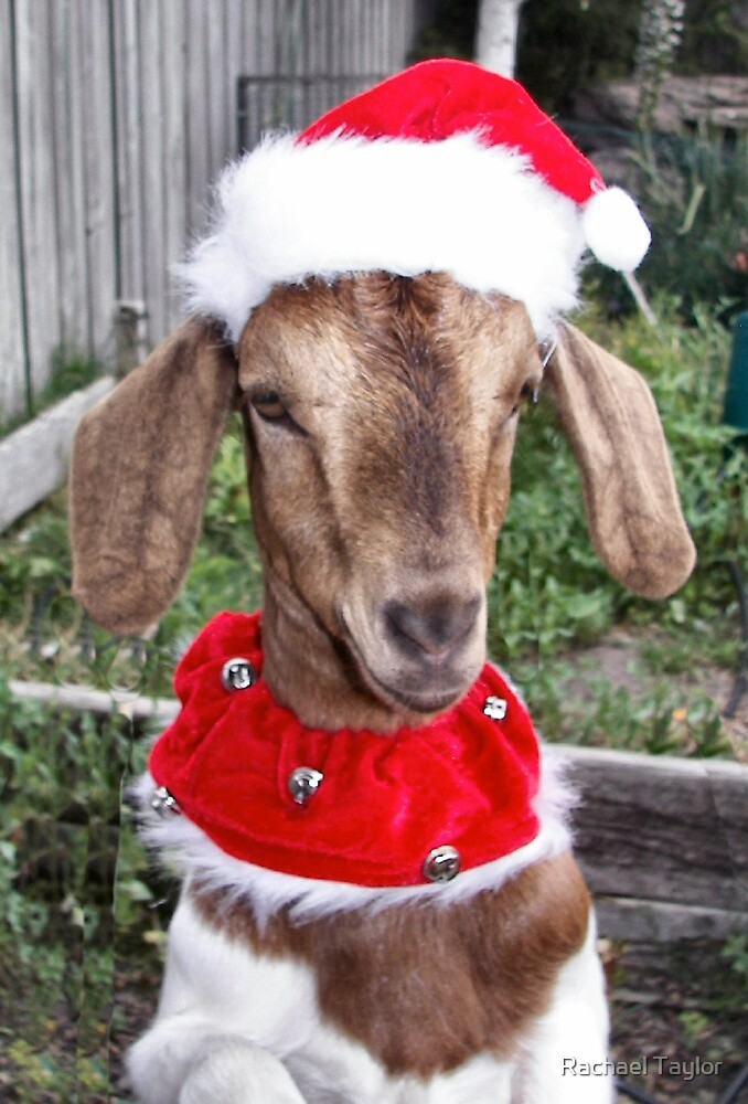 Christmas Boy by Rachael Taylor