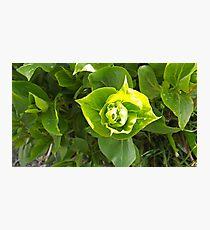 Spring plant Photographic Print