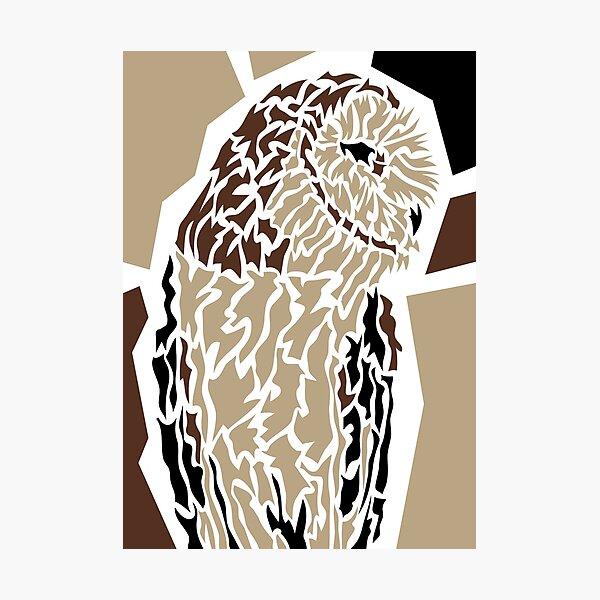 Owl Fotodruck