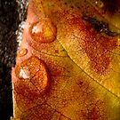 Veins by Sherstin Schwartz