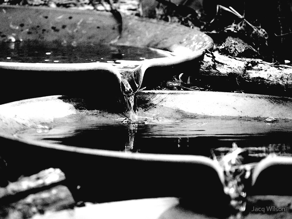 Flow Through by Jacq Wilson