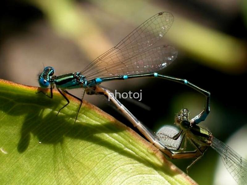 photoj 'Macro Bug' by photoj