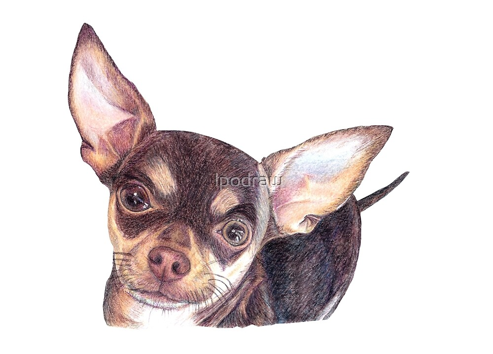 Chocolate Smooth Haired Chihuahua by lpodraw