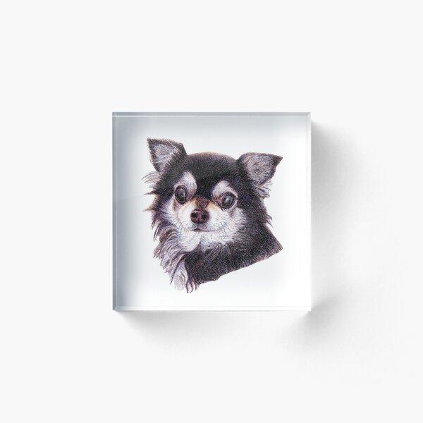 Long Haired Chihuahua Acrylic Block