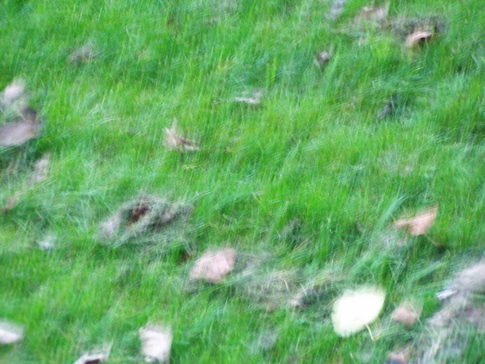 grass by joelkim