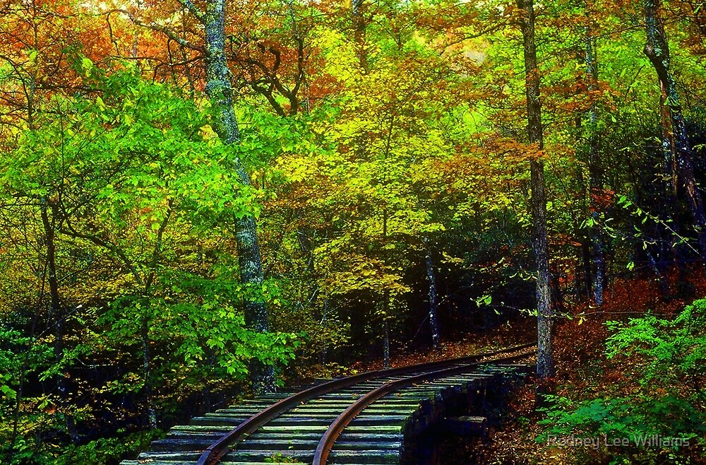 Train Tracks into the Woods by Rodney Williams