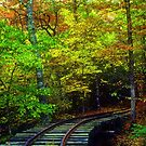 Train Tracks into the Woods by Rodney Lee Williams