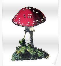 antique typographic vintage mushroom toadstool Poster