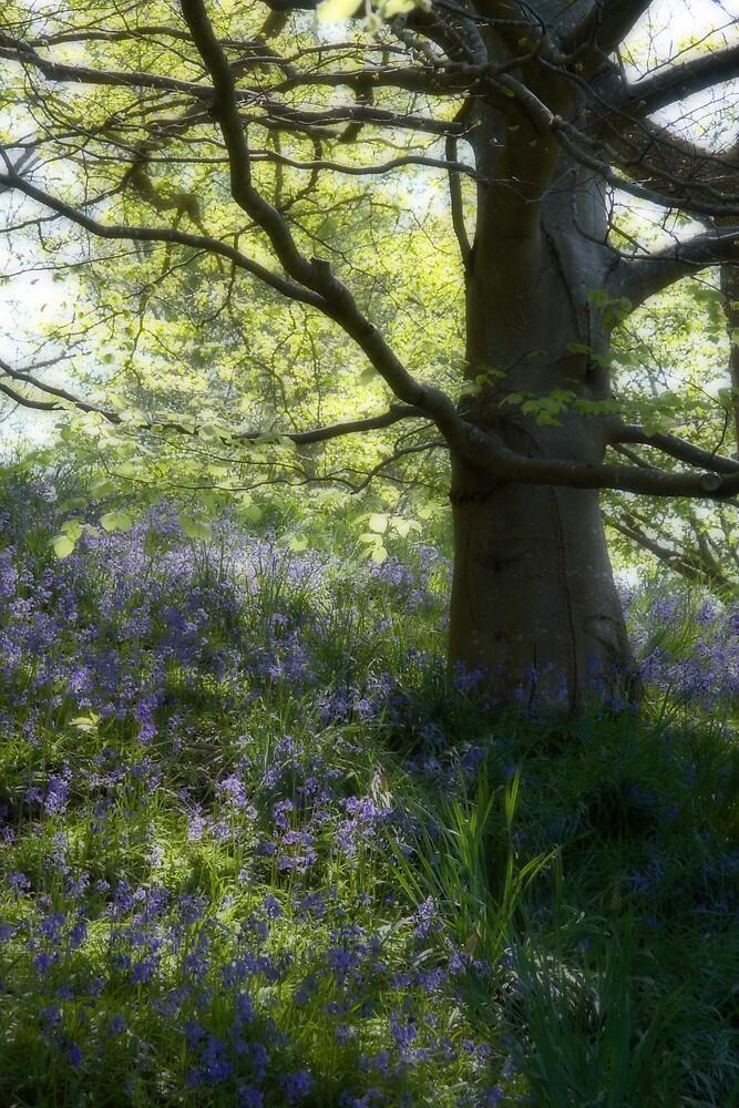 Dream Trees 2 by Alan Hawkins