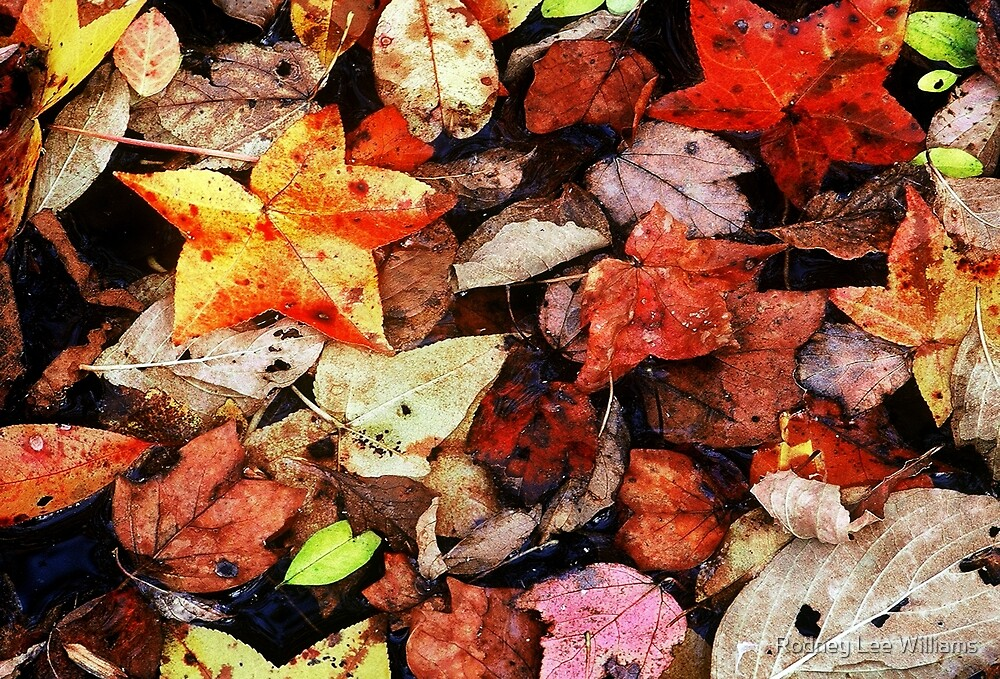 Leaf Patterns 1 by Rodney Lee Williams
