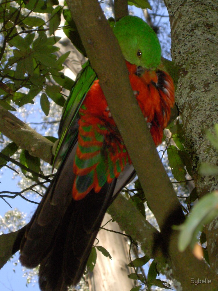 King Parrot 2 by Sybelle
