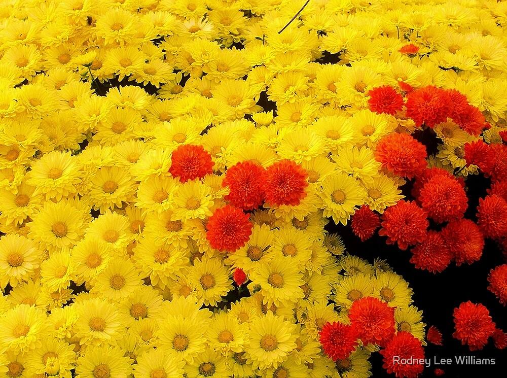 Orange Invasion by Rodney Lee Williams