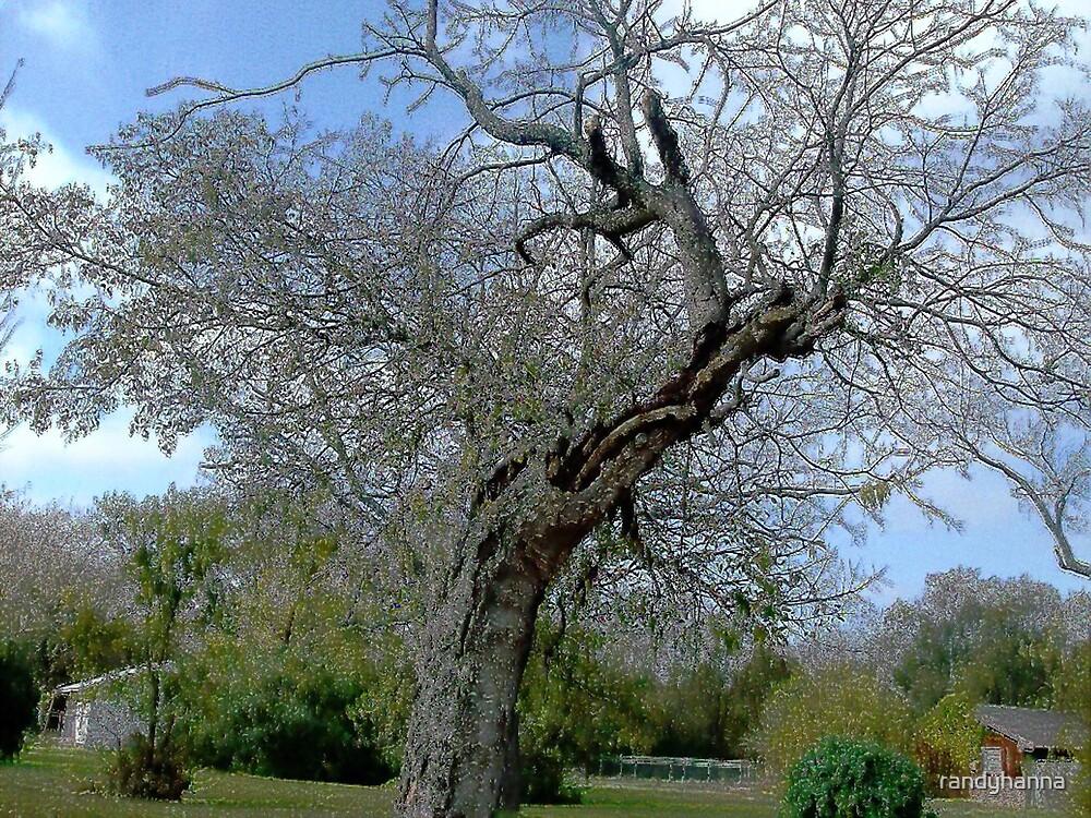 The Tree by randyhanna