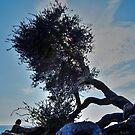Coastal Tree by Stephen Burke