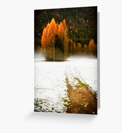 Group of pine trees in the mist Greeting Card