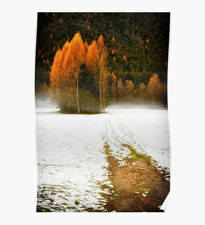 Group of pine trees in the mist Poster