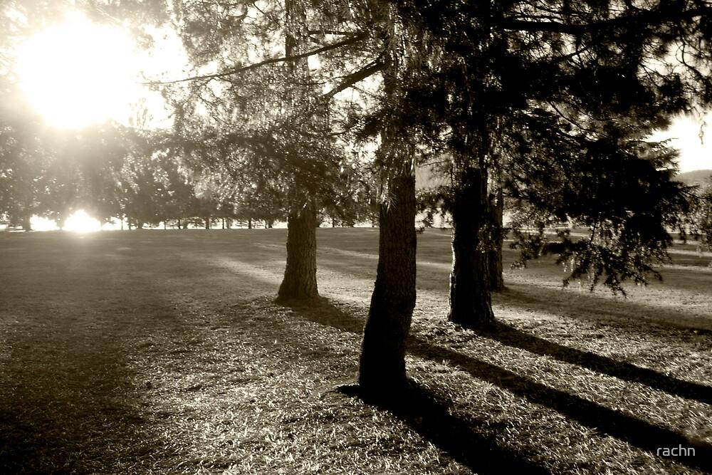 Trees at sun down  by rachn