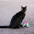 Game of Cat and Mouse by lucindaD