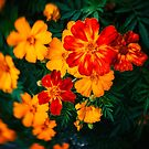 Colorful flowers by Silvia Ganora