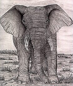 African Elephant by Natalie Wilson