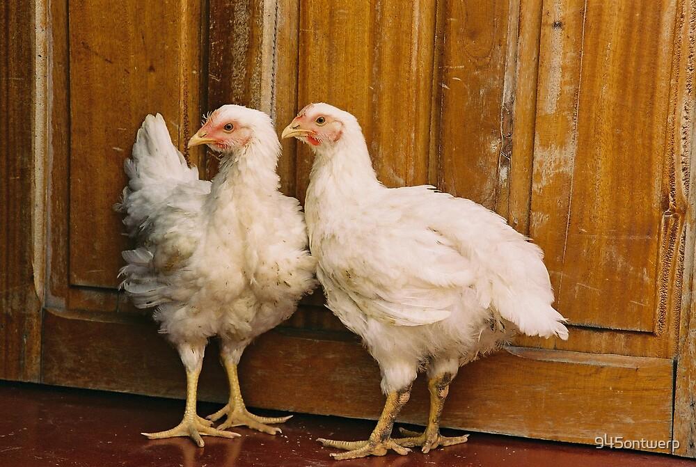 African Chicken by 945ontwerp