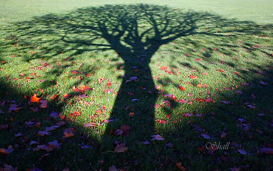 Neath the Shade of the Tree... by shall
