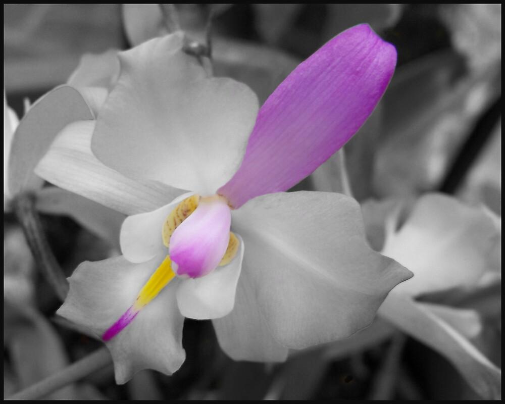 Color Me Purple by Kay  G Larsen