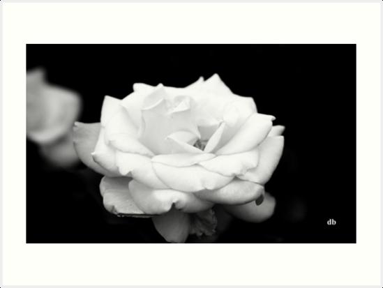 white in black & white by daniels