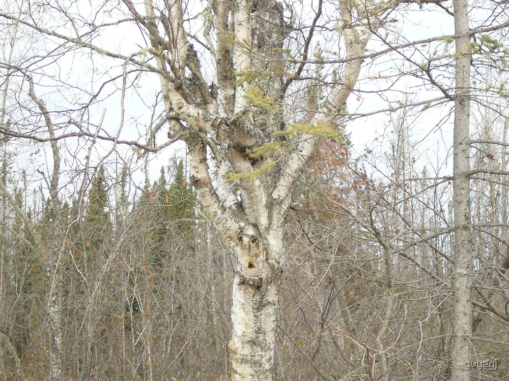 tree2see by guyegj