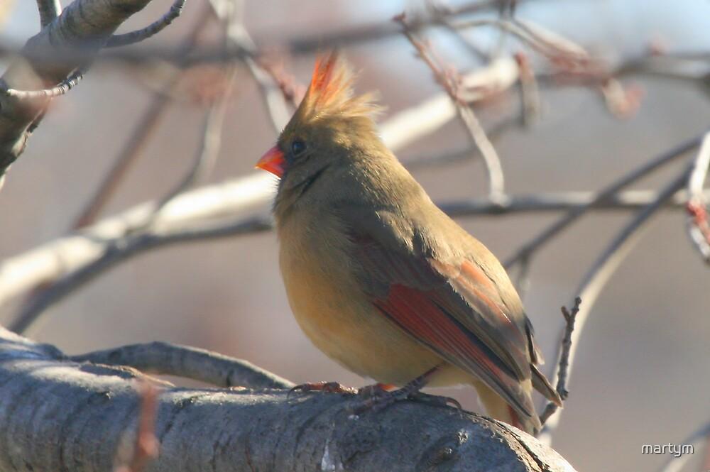red bird by martym