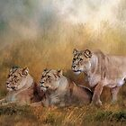 Lionesses watching the herd by Tarrby