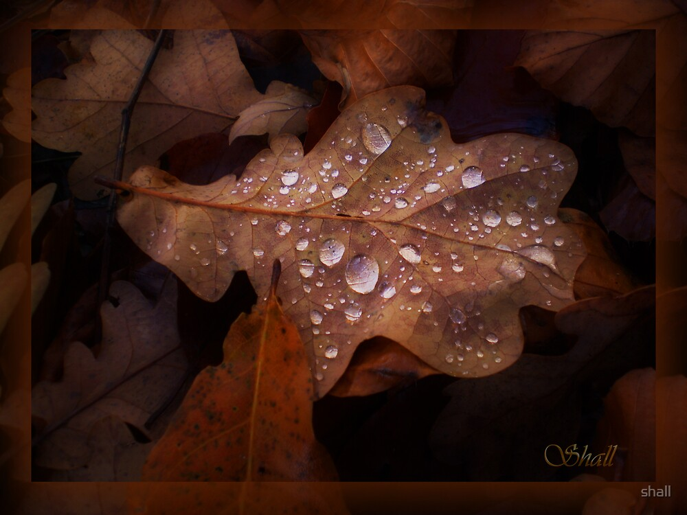 Wet Oak by shall