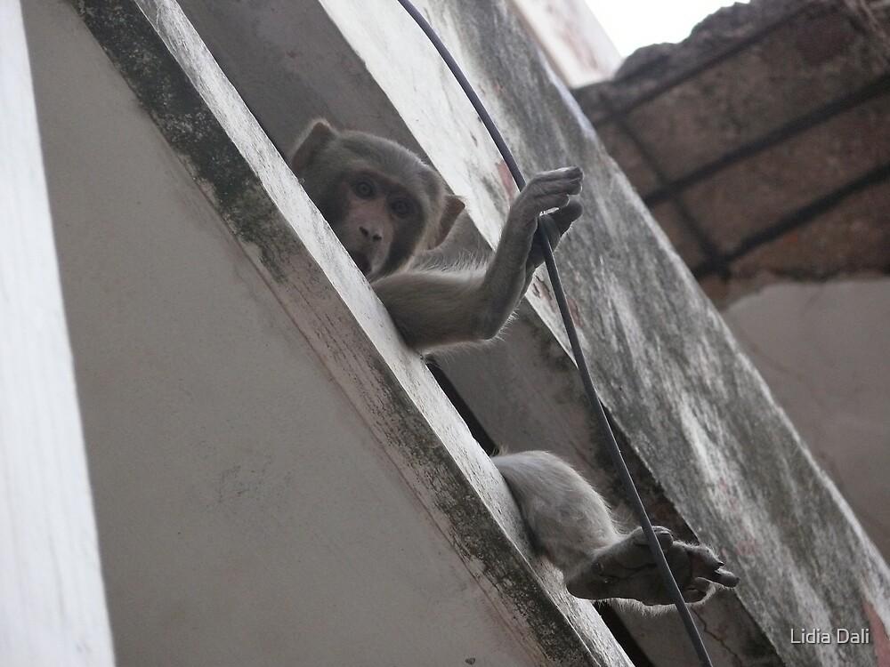Monkey by Lidiya