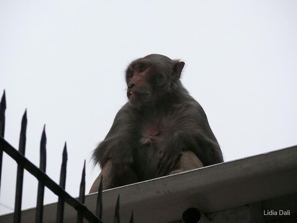 Monkey at the Roof by Lidiya