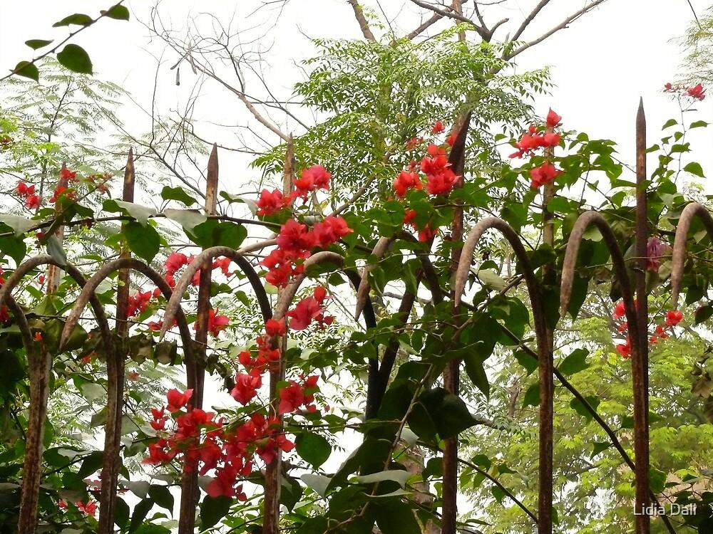 Flowers by Lidiya
