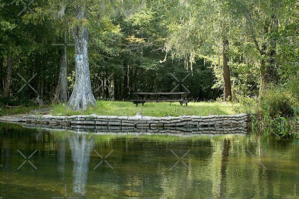 Picnic Table on the Riverbank by Stacey Lynn Payne