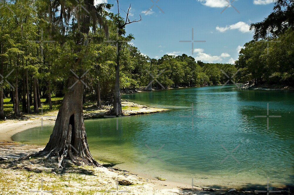 River Beach, Santa Fe River, north Florida by Stacey Lynn Payne