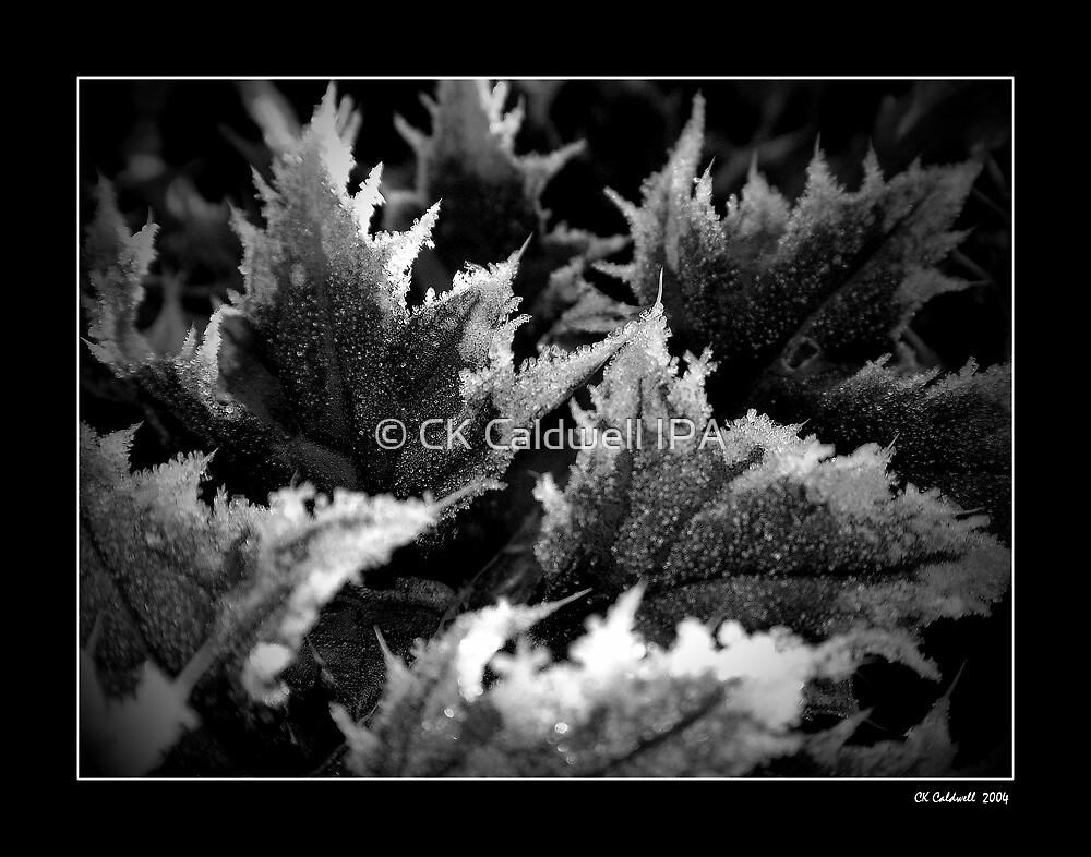Crystal Morning by © CK Caldwell IPA